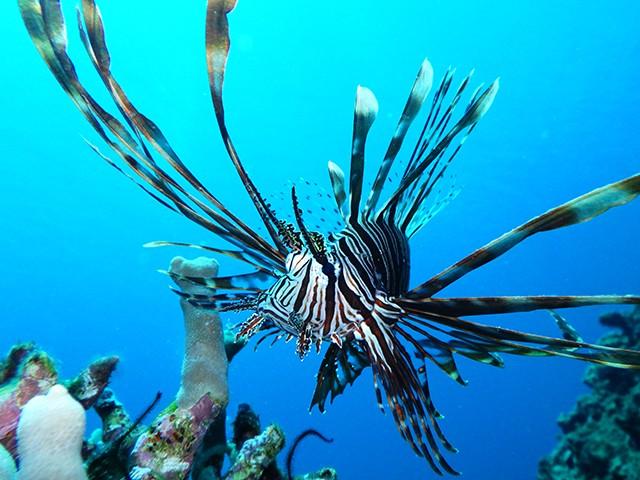 水中写真も、こんなに色鮮やかに撮影できる「マーメードモード」
