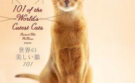 眺めているだけで癒される永久保存版!ネコ好き必見のネコ写真集5選
