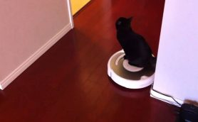 猫が掃除機を嫌いな本当の理由