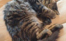 【うちの猫が雑誌デビュー!?】雑誌&WEB出演モデル猫さま&猫写真大募集