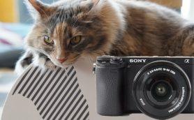 【デジカメレビュー】ネコパンチも撮れる! 世界最速AFのソニー「α6300」を片手に猫カフェに潜入してみた
