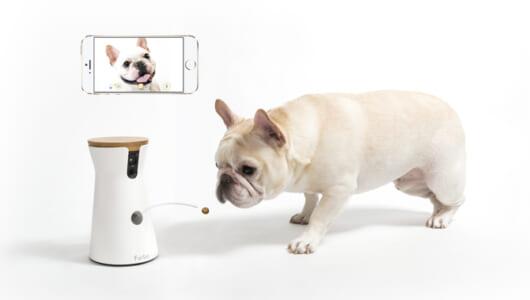 大事なワンちゃんはカメラで見守る時代に! +αのお役立ち機能が付いた最新Webカメラ3選