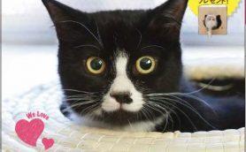 猫336匹大集合! 「GetNavi」が猫まみれになったムック「ゲットにゃび」は5月31日(火)発売!