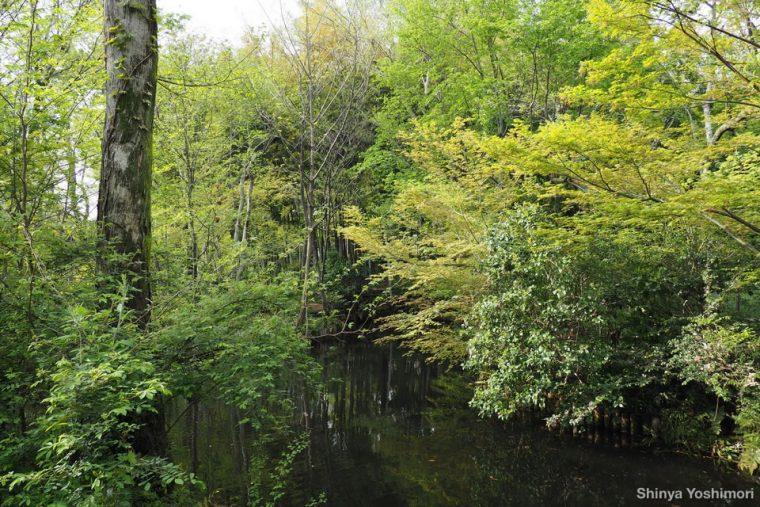 新緑に囲まれる公園内の小さな池。400ミリ相当の超望遠画角で対岸の新緑を撮影すると……