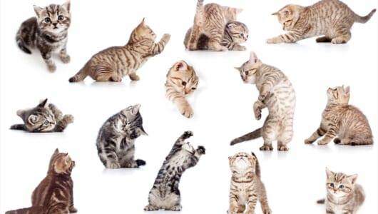 大地震の際、飼い猫をどう避難させる? 獣医が教えるキャリーケースに迅速に誘導させるトレーニング方法