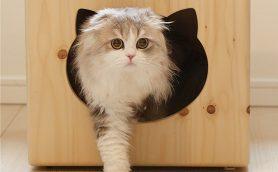 激カワ猫さま使用シーンも必見! にゃんこの「おうち」セレクション