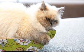 猫さまが最高に気持ちいい&かわいく見える「爪とぎ」ベスト7