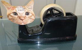 「猫のひたい 付箋メモ」が出た! 手のひらサイズなのにメモる部分は額だけ!?