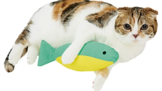 猫ちゃんが喜ぶ姿を見るならコレ! にゃんこの「おもちゃ」ベストセレクト