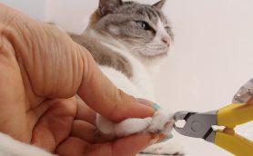 【猫ちゃんがレビュー!?】かわいい猫ちゃんの清潔感がアップ!にゃんこの「みだしなみグッズ」セレクション9