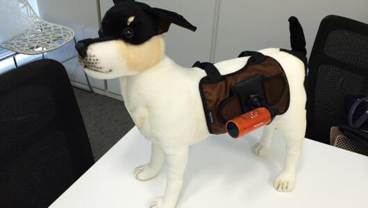 【本日発売】ペットの目線で動画を撮れる! パナソニックのウェアラブルカメラ用マウント3種
