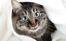 猫ちゃんがつやつやモフモフに! にゃんこの「お風呂グッズ」セレクション