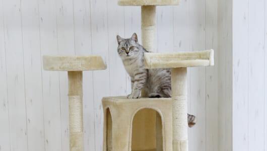 「登って隠れてお昼寝して……」猫ちゃんがイキイキ遊べるキャットタワー6選