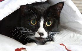 寝姿が可愛くてたまらない!夏にぴったりの「猫ちゃんベット」特集