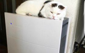 「猫ルンバ」の次は空気清浄機!? ブルーエアは驚きの脱臭力でにゃんことの相性もバッチリ!!