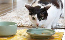 にゃんこ目線の使いやすさがうれしい! 才色兼備の「猫ちゃん用食器」ベストセレクト