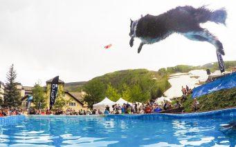 ↑DockDogs Outdoor Big Air 賢くしつけされた犬が、ステージを助走して空中にセットされたターゲットを口でくわえてゲットできるかを競うコンペです。犬の勇気を感じることができ、会場の盛り上がりはマックス!