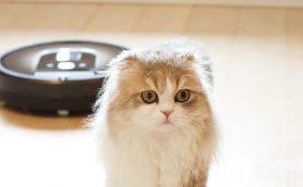 ネコの毛&ニオイを駆逐せよ! 飼い主必見の最新「クリーニング家電」4選