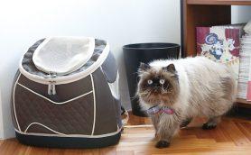 猫とのおでかけが楽しい! オシャレで機能的なにゃんこの「キャリー」セレクション