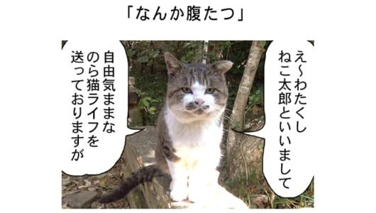 連載マンガ「田代島便り 出張版」 第1回「なんか腹たつ」