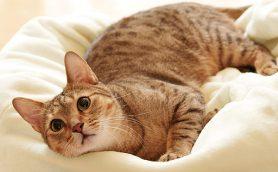 【猫グッズ保存版】インテリアにもなって猫ちゃんも大喜びのグッズ39選【猫写真たくさん】