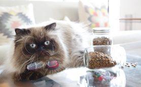 おいしくて健康にいいもの集めました! 人気の猫ちゃん用「ドライフード」ベスト4
