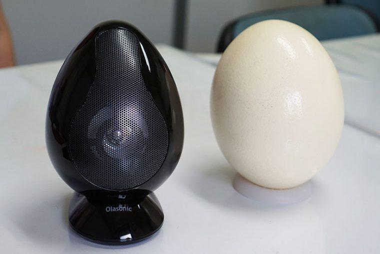 ↑右は実物大のダチョウの卵の模型