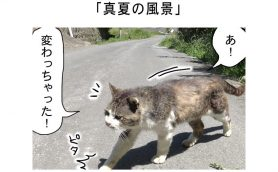 連載マンガ「田代島便り 出張版」 第3回「真夏の風景」