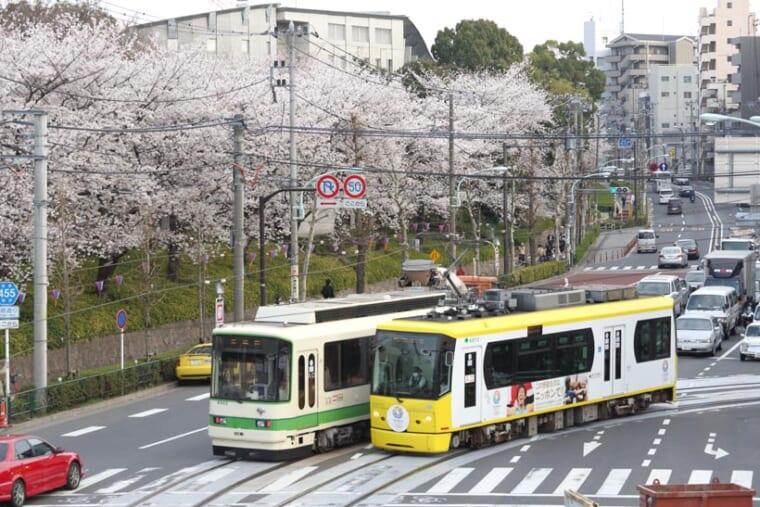 ↑華やぐ春、飛鳥山公園の桜を見ながら都電が走る