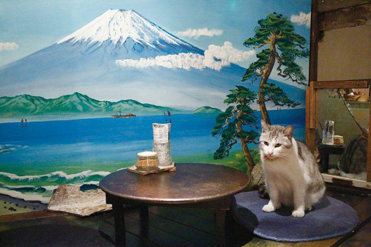 ↑ちゃぶ台の横も、ト ンくんお気に入り。富 士山を描いた襖絵をバ ックに、和の雰囲気で