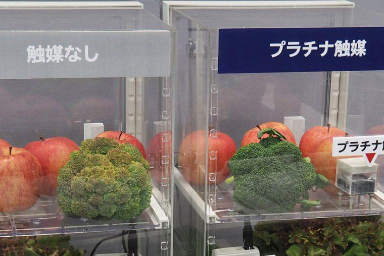 プラチナ触媒のある環境とない環境で1週間保存したブロッコリーの状態を比較します。ブロッコリーのまわりには、野菜を老化させる「エチレンガス」を発生しやすいリンゴを配置。触媒なしのブロッコリーは茶色く変色してしまっています