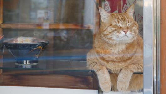 かわいい猫ちゃんがおもてなし! 都会の看板ねこギャラリー【後編】