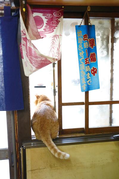 ↑店内からショーケースをのぞきこ むピンクくん。ゆらゆらしっぽをふ って外をのぞく姿はまさに招き猫