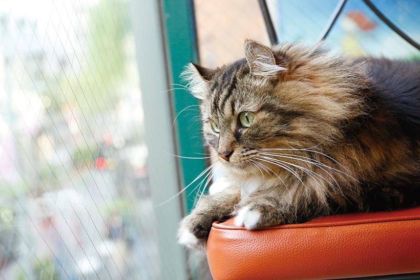 0ビル2階にある店の 窓際席から、人間界を 見下ろすカイザーくん。 目力もスゴイのです