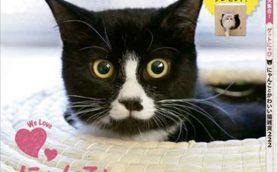 【猫ネタ】SNSの人気アカウント&「猫パロディ雑誌」を集めてみた