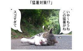 連載マンガ「田代島便り 出張版」 第7回「猛暑対策!?」