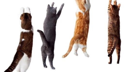 猫の手を借りた髪留めがある!? 猫ちゃんモチーフの「ヘアアクセ&コスメ」がカワイイ!!