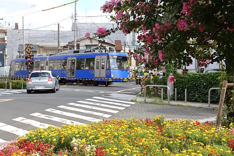 ↑沿線を歩くと四季折々、美しい花咲く風景に出会う。華やかな世田谷線の電車にお似合いの光景だ