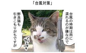 連載マンガ「田代島便り 出張版」 第9回「台風対策」