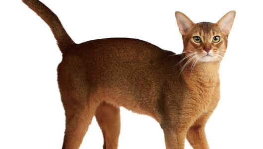 猫に与えたら絶対にNGな食べ物って? 覚えておきたいにゃんこの基礎知識【種類と特徴&ごはん編】