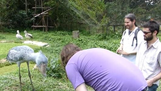 【動画】お辞儀を返す礼儀正しい鳥がいる!? マンガ家が見つけた動物おもしろリアクション3選
