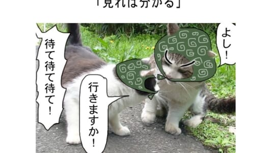 連載マンガ「田代島便り 出張版」 第10回「見れば分かる」