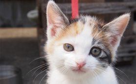 すべての猫好きに知ってほしい! 身寄りのないにゃんこの命を守る5つの取り組み