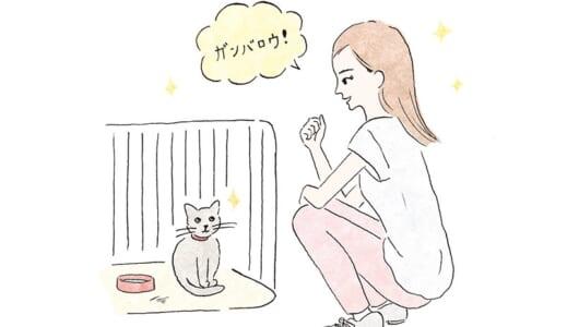 猫と被災したらどうする? 飼い主が知っておくべき5つの鉄則