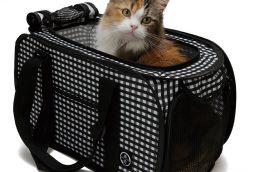 「そのとき」が来てからでは遅い! いまから備えるべき猫ちゃんの避難グッズ7選