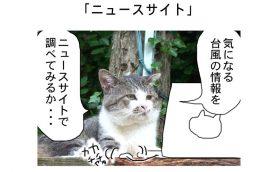 連載マンガ「田代島便り 出張版」 第13回「ニュースサイト」