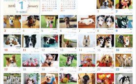 【急げ!】我が家のペットがカレンダーに! 2017年版「365カレンダー」のエントリーが9月30日まで
