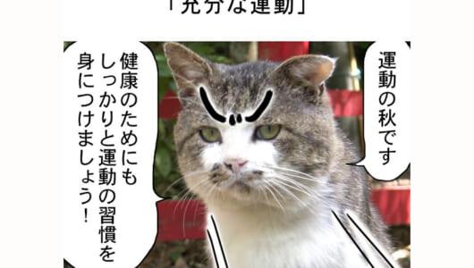 連載マンガ「田代島便り 出張版」 第14回「充分な運動」