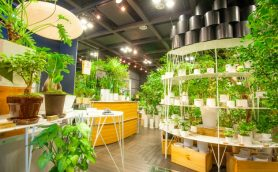 観葉植物は手間がかからないって知ってた? 初心者にも育てやすい観葉植物4選