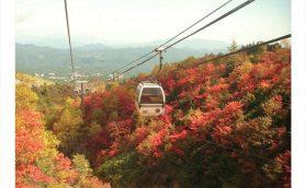 ロープウェイからの紅葉狩りは格別! 動く展望台のように絶景を楽しめるロープウェイ3選
